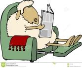 reading sheep
