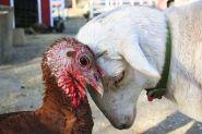 turkey-lamb-upc_400z