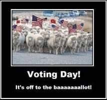 voting-sheep