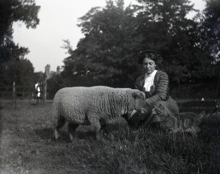 vintage woman with sheep